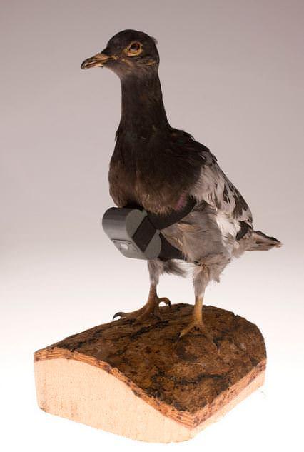 spionkamera duer